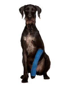 dog-arm-bandage