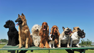 group of puppies purebred dogs on a table