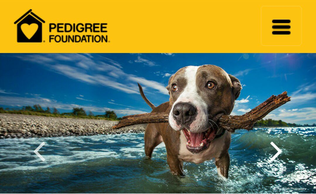 Home paws half of them never find a place to call home for more information on how you can support the foundation visit httpspedigreefoundation solutioingenieria Image collections
